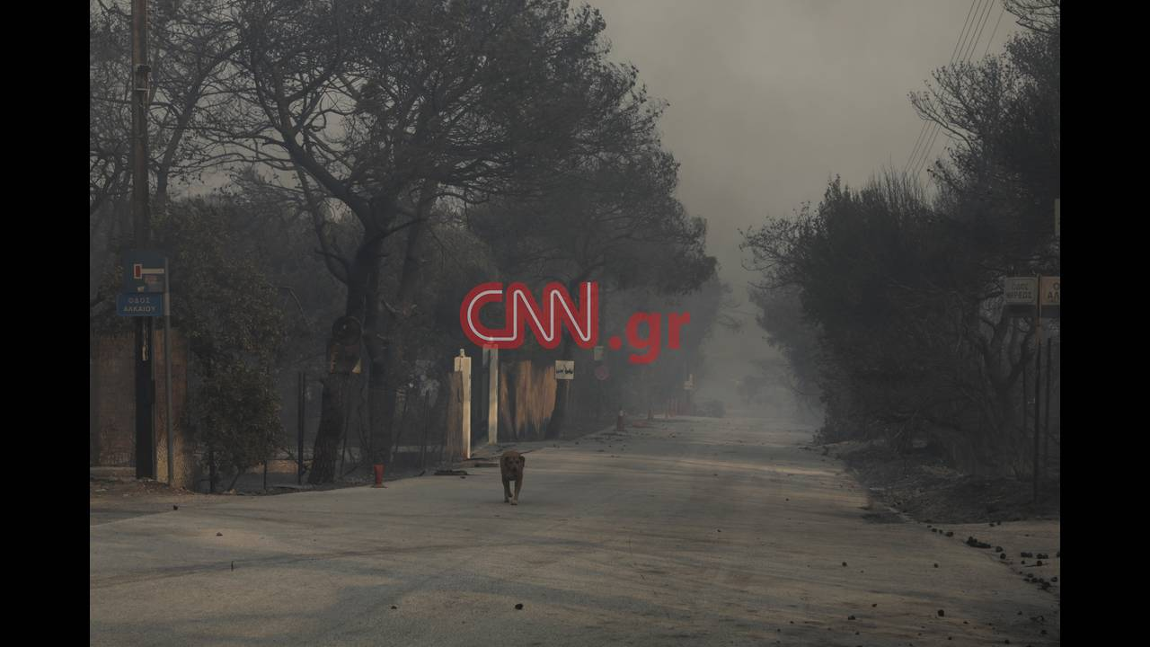 https://cdn.cnngreece.gr/media/news/2018/07/24/139934/photos/snapshot/4314355376_LP2_3756.jpg