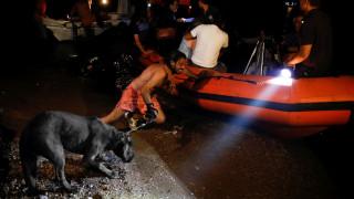 Φωτιά - Αττική: Έκκληση για βοήθεια στα τετράποδα θύματα της φωτιάς