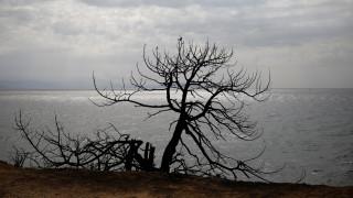 Φωτιά - Αττική: Οι πληγές της επόμενης μέρας