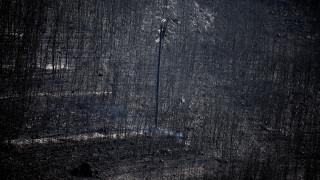 Φωτιά Αττική: Πότε θα επανέλθει η ηλεκτροδότηση στις πληγείσες περιοχές