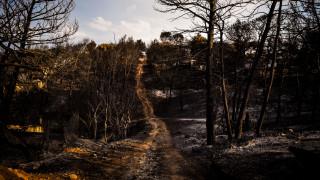 Φωτιά Αττική: Νέα παραίτηση αντιδημάρχου στον Μαραθώνα