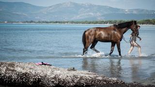 Άλογα κολυμπούν στην παραλία Σχοινιά