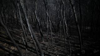 Ζωές στις φλόγες: Οικογενειακά δράματα μέσα στα αποκαΐδια