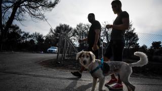 Πυρκαγιά Αττική: Σκύλος κρύφτηκε σε φούρνο σπιτιού και κατάφερε να σωθεί από τη φωτιά (vid)