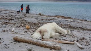 Σάλος στη Νορβηγία μετά την εν ψυχρώ δολοφονία μιας πολικής αρκούδας