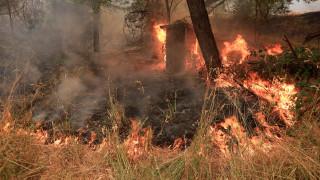 Συνεχίζεται η μάχη με τη φονική πύρινη λαίλαπα στην Καλιφόρνια