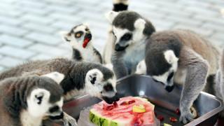 Πρόστιμο σε επισκέπτες που ταΐζουν τα ζώα θα επιβάλλει ο ζωολογικός κήπος του Πεκίνου