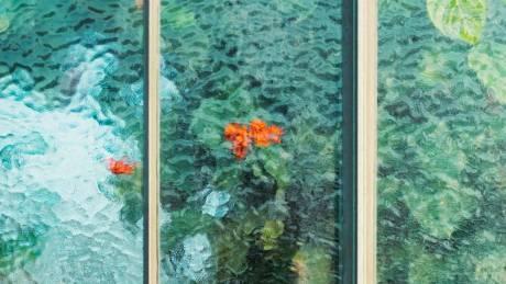 Botanical: κήποι ελπίδας για την κλιματική αλλαγή σε οκτώ καρέ