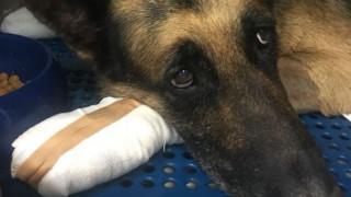 Φωτιά Αττική: Ιδιοκτήτης σκύλου δεν τον θέλει πίσω γιατί κάηκαν οι πατούσες του