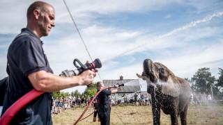 Καύσωνας στη Δανία: Ως και οι ελέφαντες υποφέρουν από τη ζέστη