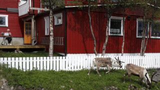 Νορβηγία: Ανάσα δροσιάς στις σήραγγες αναζητούν οι τάρανδοι