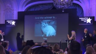 Βρετανία: Γάτος βραβεύεται μετά θάνατον, επειδή έσωσε την άρρωστη αφεντικίνα του
