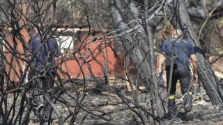 Φωτιά Μάτι: Στους 93 οι νεκροί της τραγωδίας