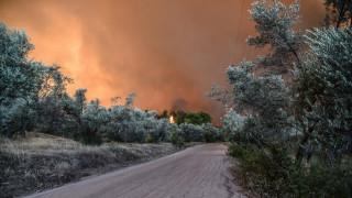 Πυρκαγιά Εύβοια: Αισιοδοξία Ταφύλλη για την εξέλιξη του μετώπου