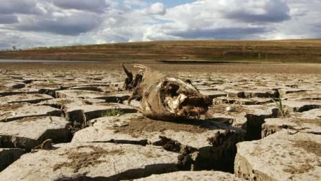 Ξηρασία στην Αυστραλία: Γιατί οι κτηνοτρόφοι σκοτώνουν τα καγκουρό