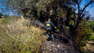 Ηλεία: Υπό μερικό έλεγχο η φωτιά στη Διάσελλα