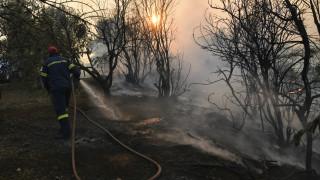 Πυρκαγιά Εύβοια: Μόνο μικροεστίες στην περιοχή