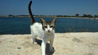 Ανάρπαστη η αγγελία εργασίας σε ελληνικό νησί