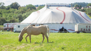 Άλογο το «έσκασε» από σόου της Ουαλίας και τραυμάτισε έξι ανθρώπους