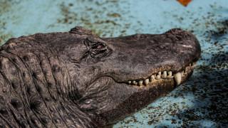 Muja: Ο 80χρονος αλιγάτορας του Βελιγραδίου