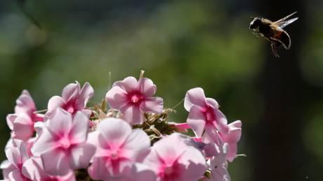 Μπορεί μια μέλισσα να δώσει λύση στο πρόβλημα των πλαστικών;