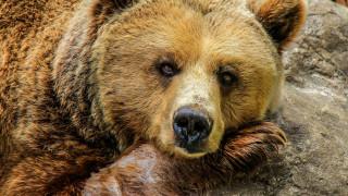 Πάλεψε με αρκούδα, έπεσαν μαζί σε γκρεμό, τον δάγκωσε, αλλά κατάφερε να γλιτώσει