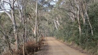 Πέθανε ο «Ταρζάν» της Αυστραλίας