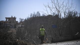 Ένας μήνας μετά τη φονική πυρκαγιά: Τα βήματα στήριξης για την αποκατάσταση