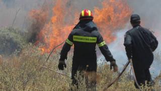 Πυρκαγιά στη Σαλαμίνα - Εκκενώθηκε κατασκήνωση προσκόπων