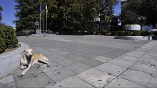 Λάρισα: Περισσότερα από 40 σκυλιά νεκρά από φόλες στην Αγιά