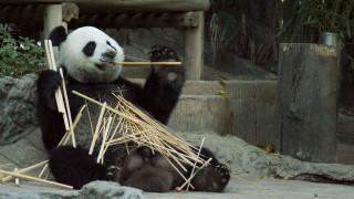 Πεκίνο: Μια εβδομάδα αφιερωμένη στα... πάντα