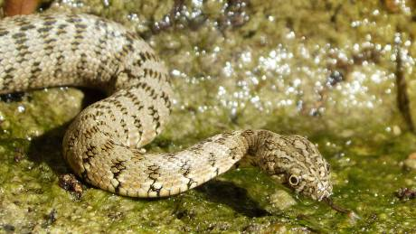 Συναγερμός για φίδια στην Ινδία μετά τις φονικές πλημμύρες