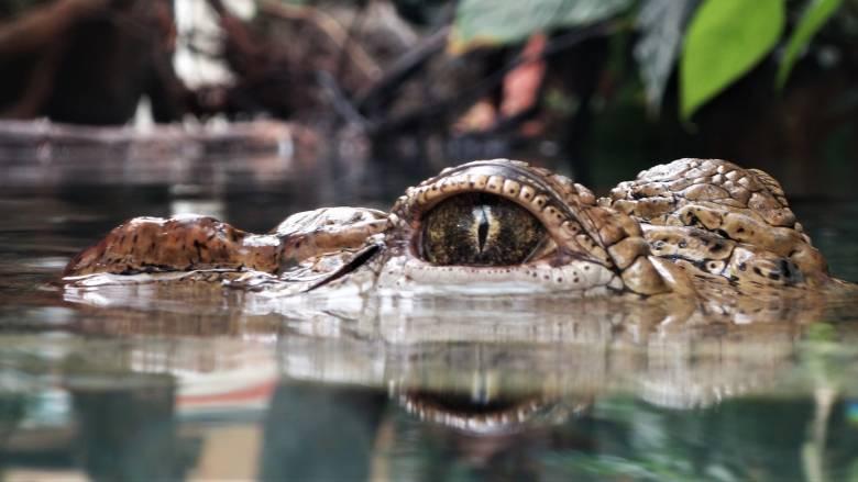 Αυστραλία: Παράνομο πλοιάριο προσάραξε σε περιοχή με κροκόδειλους