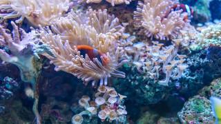 ΗΠΑ: Στο φως απίστευτος κοραλλιογενής ύφαλος που «κρυβόταν» χιλιάδες χρόνια