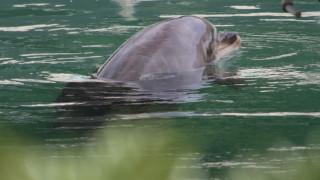 #SaveHoney: Κραυγή αγωνίας για το εγκαταλελειμμένο δελφίνι σε ενυδρείο της Ιαπωνίας