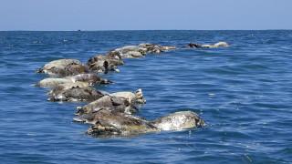 Εκατοντάδες θαλάσσιες χελώνες εντοπίστηκαν νεκρές στις ακτές του Μεξικού