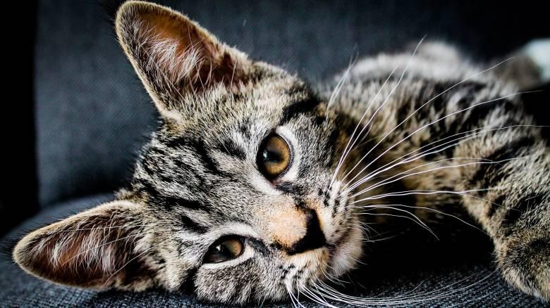 Νέα Ζηλανδία: Περιφερειακό συμβούλιο εισηγήθηκε την απαγόρευση των... γατών