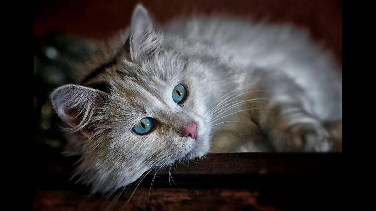 https://cdn.cnngreece.gr/media/news/2018/08/30/144801/photos/snapshot/cat-1146504_1920.jpg