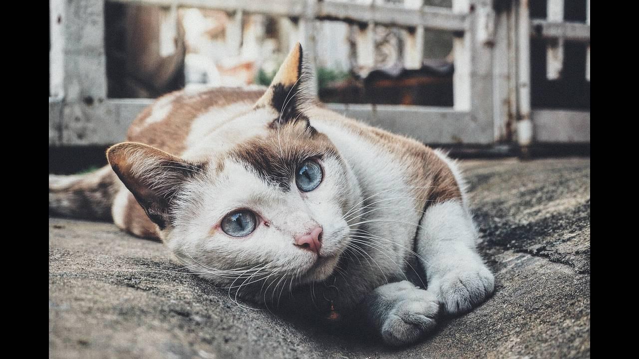 https://cdn.cnngreece.gr/media/news/2018/08/30/144801/photos/snapshot/cat-1209067_1920.jpg