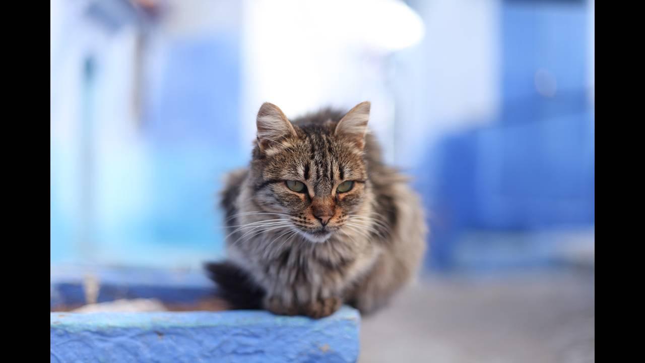 https://cdn.cnngreece.gr/media/news/2018/08/30/144801/photos/snapshot/cat-3573543_1920.jpg