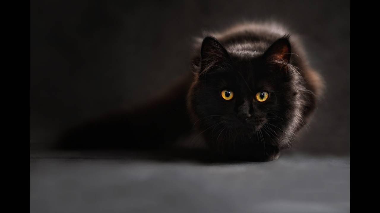 https://cdn.cnngreece.gr/media/news/2018/08/30/144801/photos/snapshot/cat-694730_1920.jpg