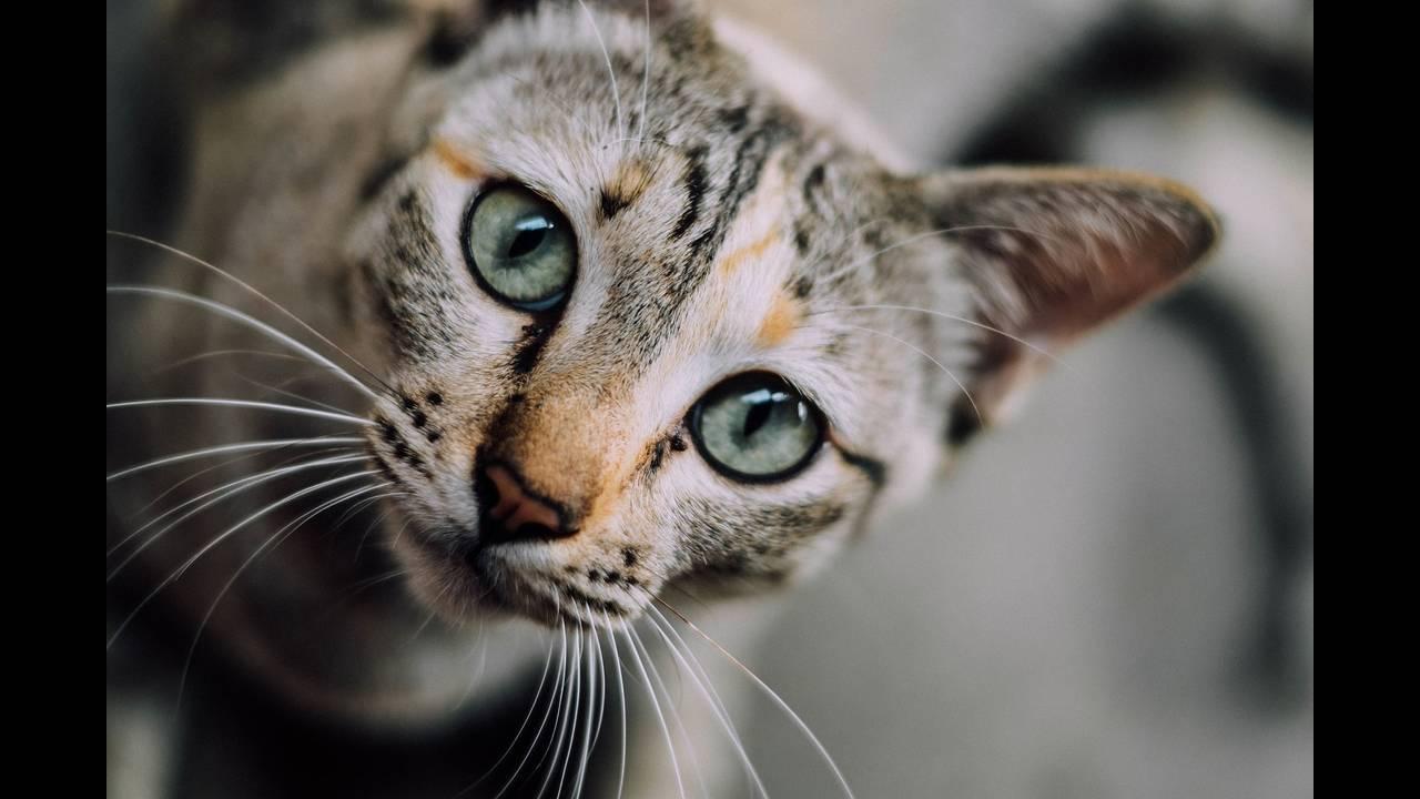 https://cdn.cnngreece.gr/media/news/2018/08/30/144801/photos/snapshot/cat-face-1081951_1920.jpg