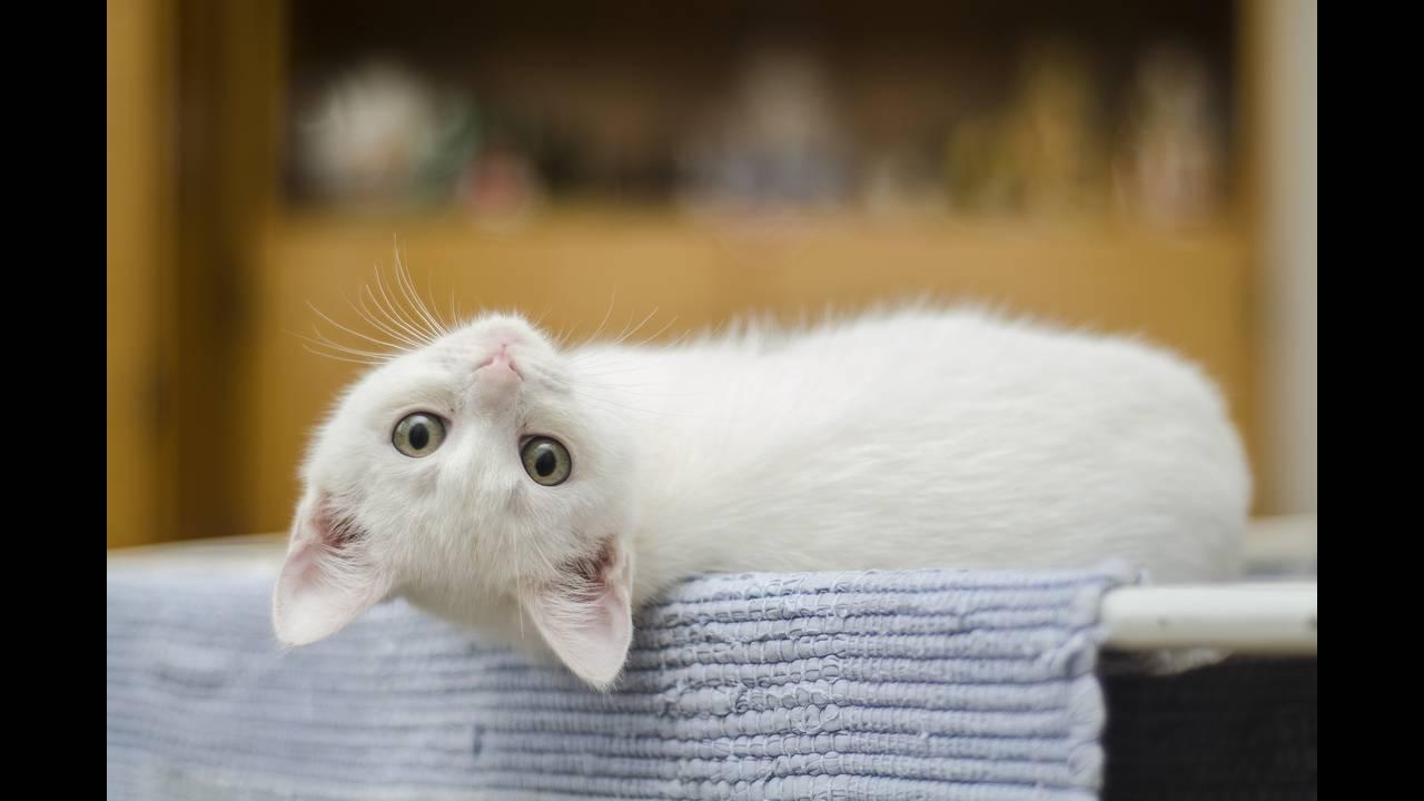 https://cdn.cnngreece.gr/media/news/2018/08/30/144801/photos/snapshot/kitten-1285341_1920.jpg