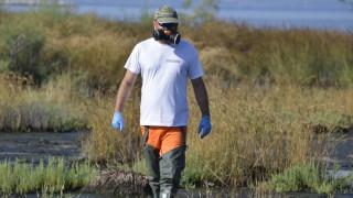 Ιός Δυτικού Νείλου: Κατεπείγουσα εντολή για ψεκασμούς κατά των κουνουπιών