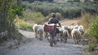 Τρίκαλα: Στην εντατική βοσκός μετά από πτώση σε χαράδρα