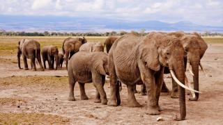 Νεκροί σχεδόν 90 ελέφαντες από λαθροκυνηγούς στην Μποτσουάνα