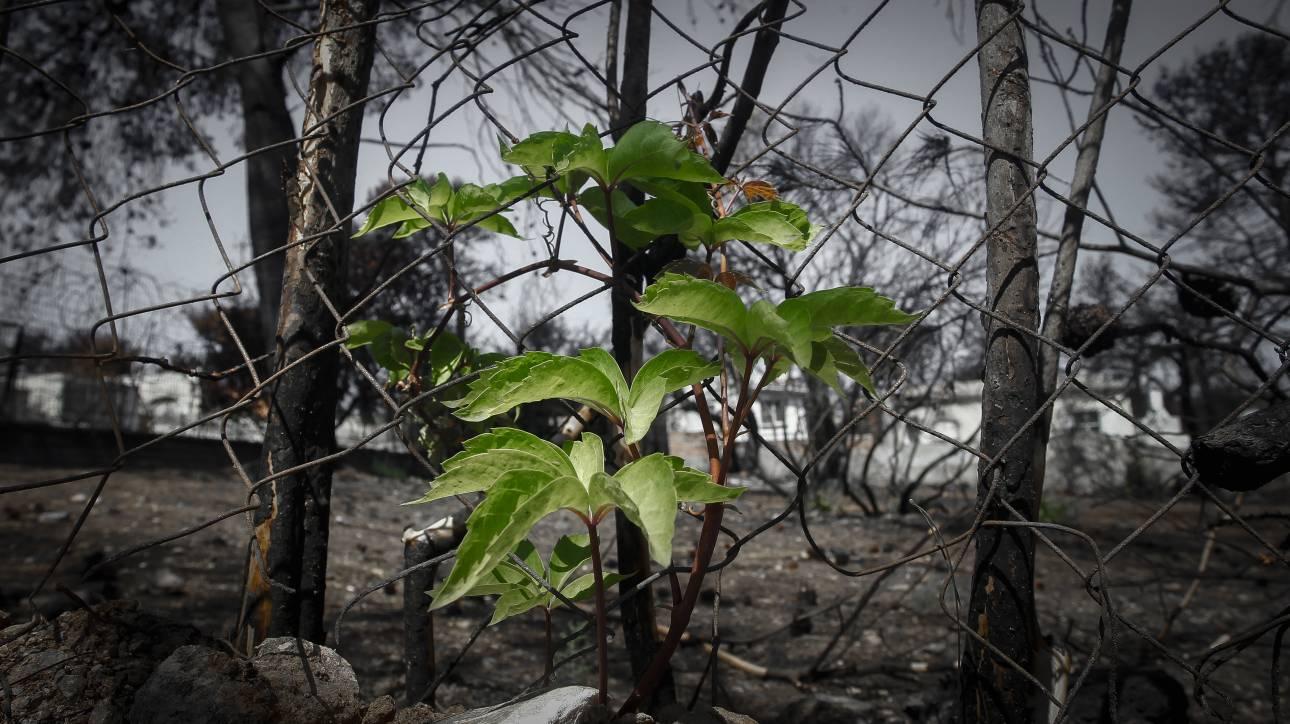 Πάρκο στο πυρόπληκτο Μάτι Αττικής, αποφάσισε να δημιουργήσει η Διαρκής Ιερά Σύνοδος