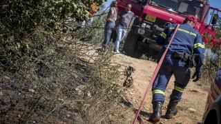 Φωτιά στην Αρκαδία: Κοντά στον πλήρη έλεγχο της πυρκαγιάς η πυροσβεστική