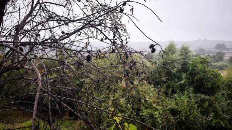 Καιρός: Μικρή πτώση της θερμοκρασίας και πιθανότητα καταιγίδων την Τετάρτη