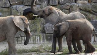 Καμηλοπαρδάλεις, ελέφαντες και αντιλόπες απολαμβάνουν τα χιόνια στη Νότια Αφρική
